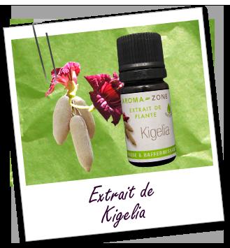 H.E extrait de plante kigelia